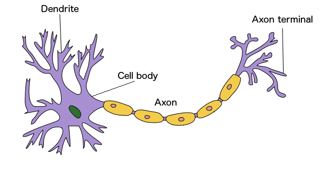 Deep learning made simple part 1 diagram of a neuron a modified version of this image ccuart Choice Image